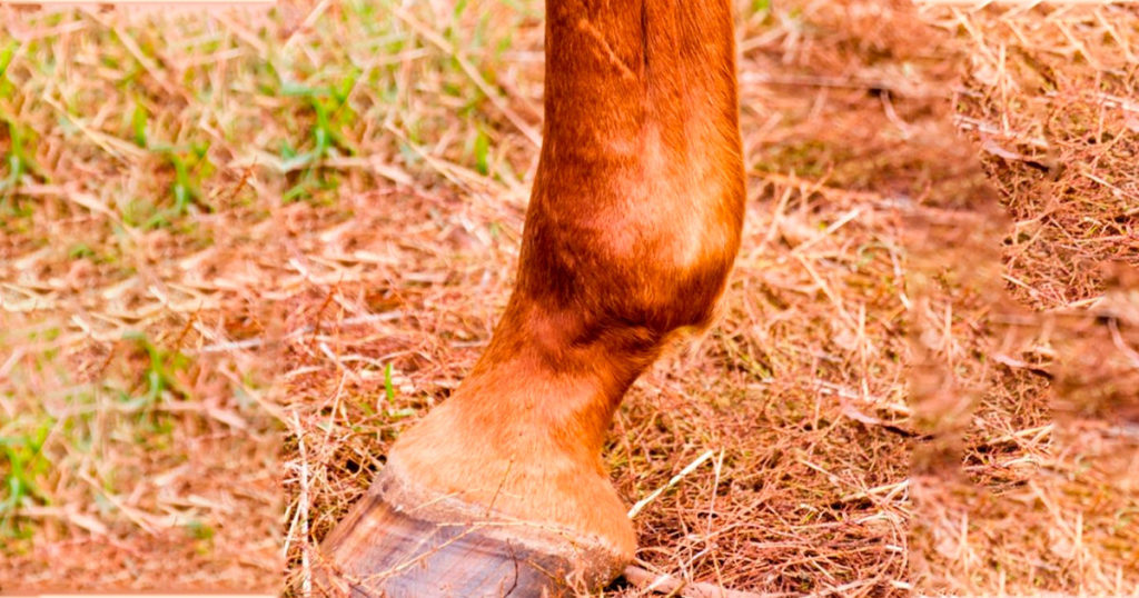 An-Holistic-Approach-to-Joint-Health-Optim-Equine