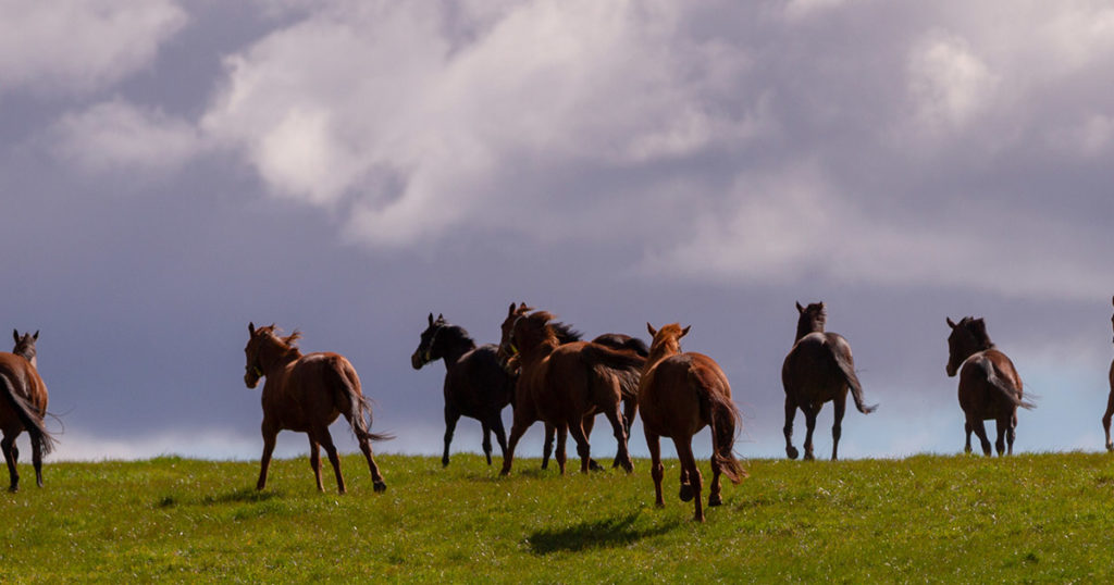 An-Holistic-Approach-to-Mare-Behaviour-Optim-Equine