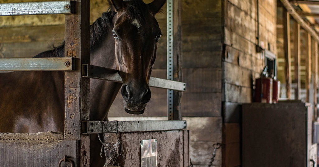 The Stabled/Stalled Horse: The Impact of Ammonia and Airway Health-Optim-Equine