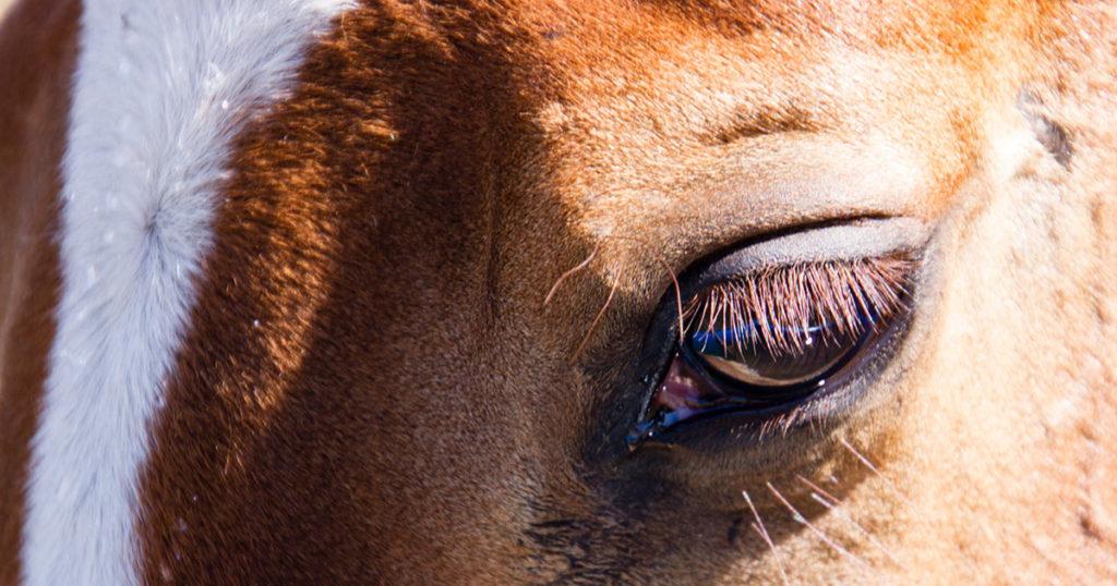 Equine-Hospital-Nutritional-Practices-Optim-Equine
