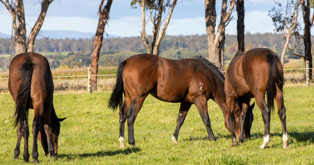 Fibre,-Chewing-and-Gastrointestinal-Health-Optim-Equine