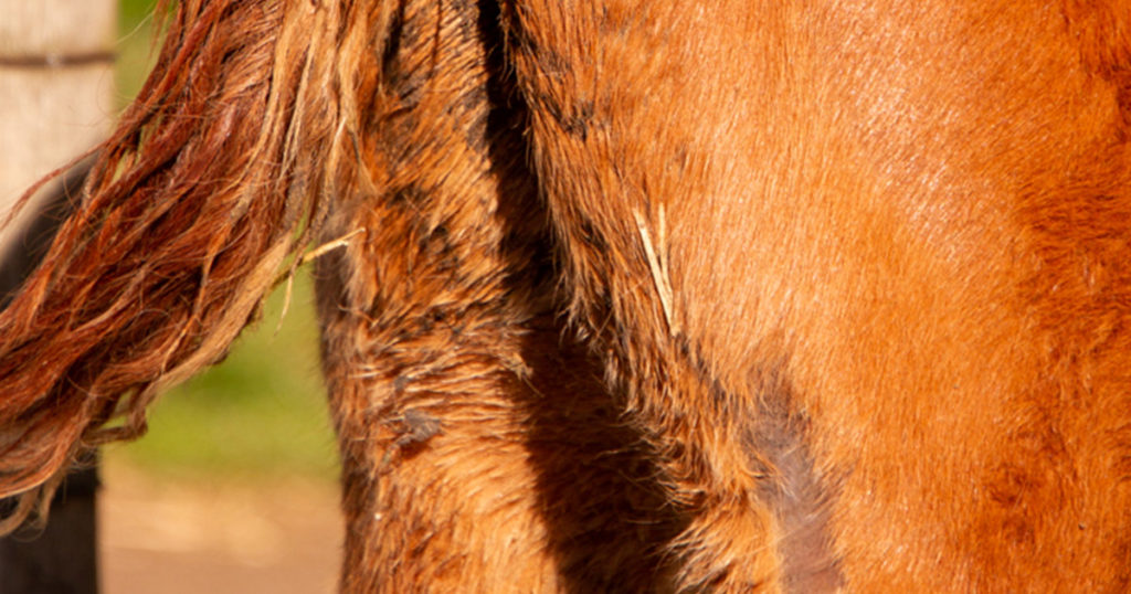 Foal-Heat-Scours-and-Diarrhoea-Optim-Equine