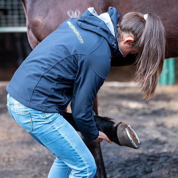 General Management, Supplementation and Feeding Programs Optim Equine
