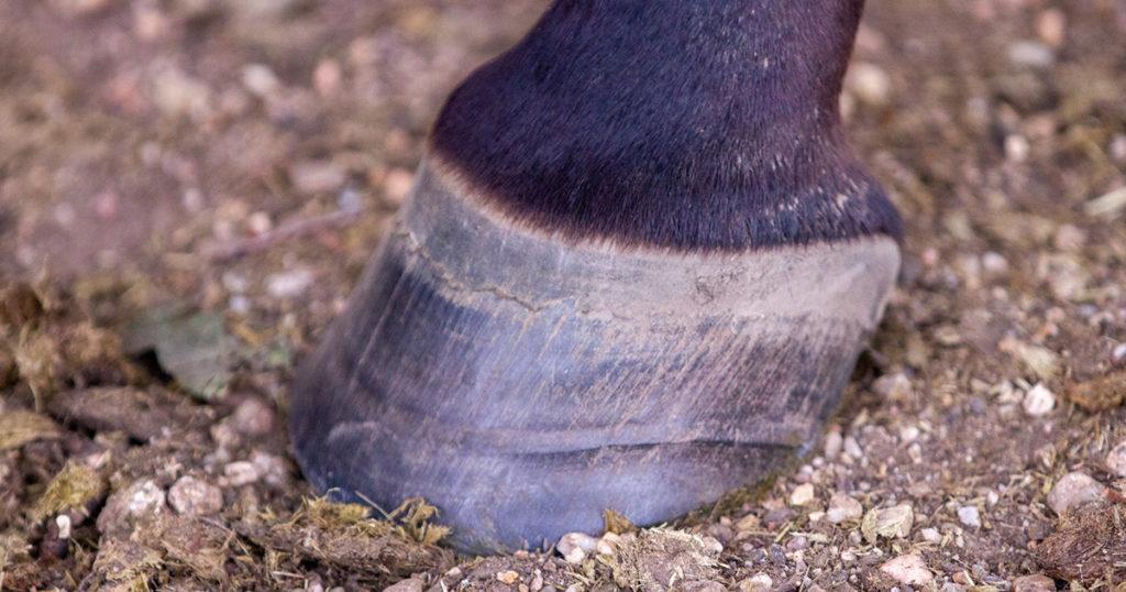 Hoof-care-Hoof-Rings-and-Ridges-Optim-Equine