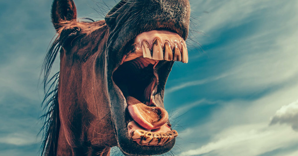 Horse Dental Health and Systemic Inflammation-Optim-Equine