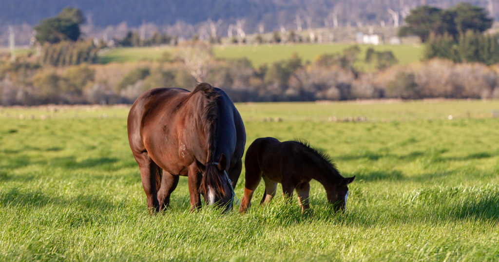 Mare-Body-Condition-Osteochondrosis-Risk-in-Offspring-Optim-Equine