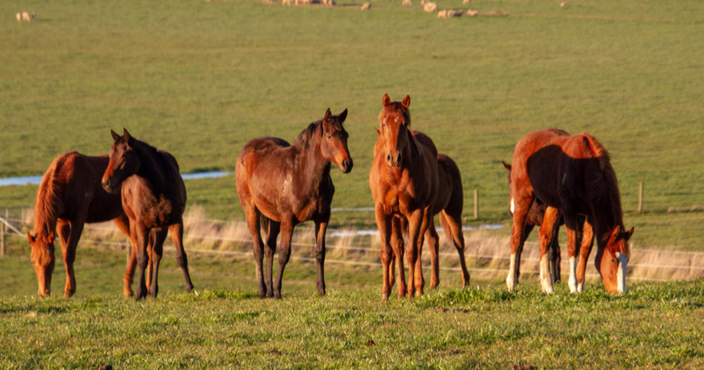 Selenium-Deficiency-(&-Toxicity)-in-the-Equine