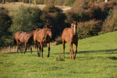 Supplements-An-Holistic-Approach-Optim-Equine