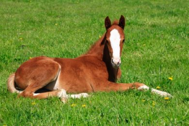 Ulcer-Medications-What-Nobody-Tells-You-And-What-You-Need-To-Know-Optim-Equine
