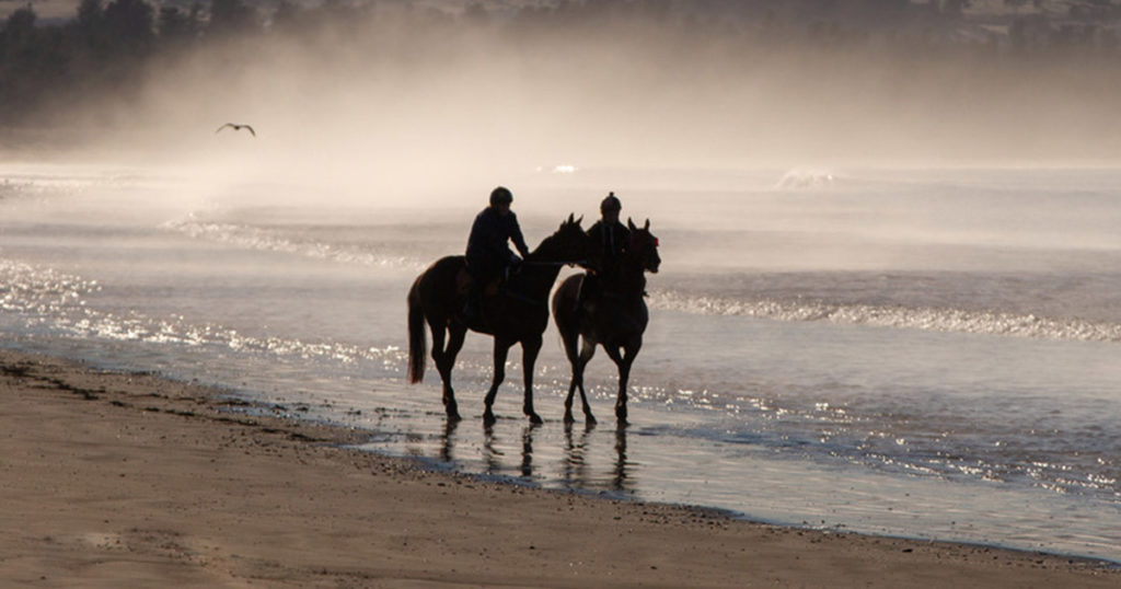 Vitamin-D-and-Rugging-An-Important-Consideration-Optim-Equine