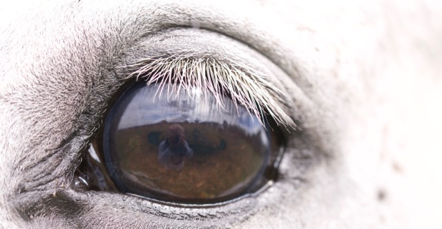 essential-equine-health-basics-Optim-Equine
