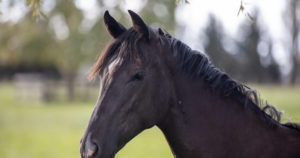 Ulcers in Horses: The importance of understanding how medications work